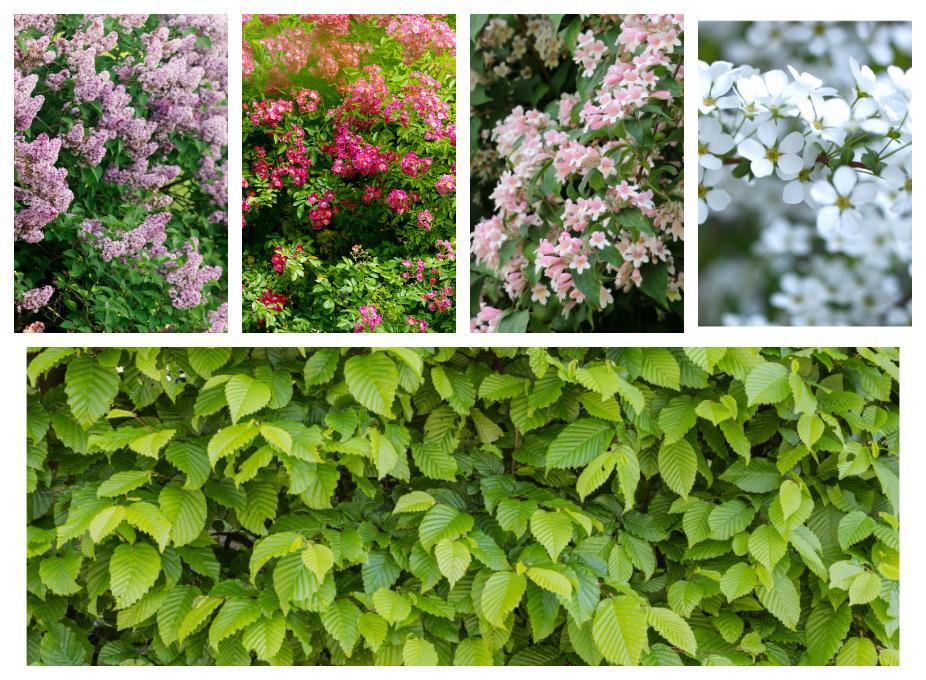 Det finns många växter som passar till en berså.