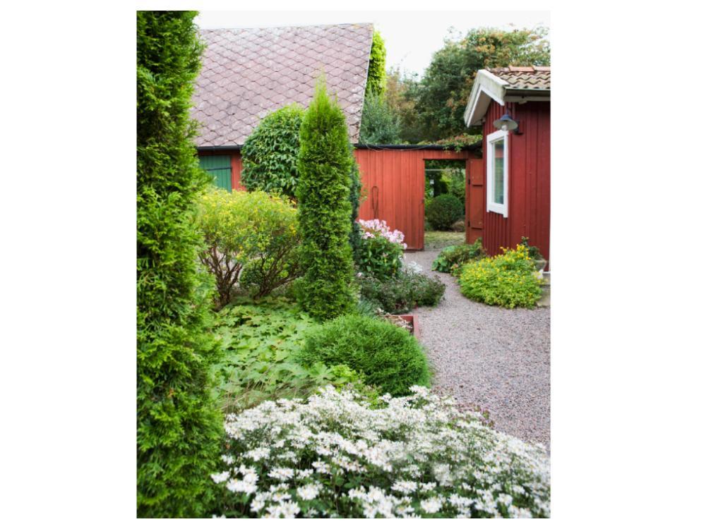 En skyddad gård kan ge plats för mer ömtåliga växter.