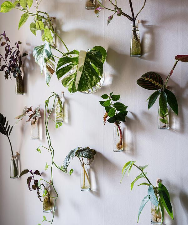 Idén till att sätta upp sticklingar på väggen fick Emelie från favoriten Hilton Carter. Vissa sticklingar bor i vasen hela sitt liv och kastas när de inte orkar längre, andra planeteras när de har fått tillräckligt med rötter. Många sticklingar ger Emelie bort när de är planterade, oftast är det växter hon redan har – då är det kul att ge bort dem till nya glada ägare.
