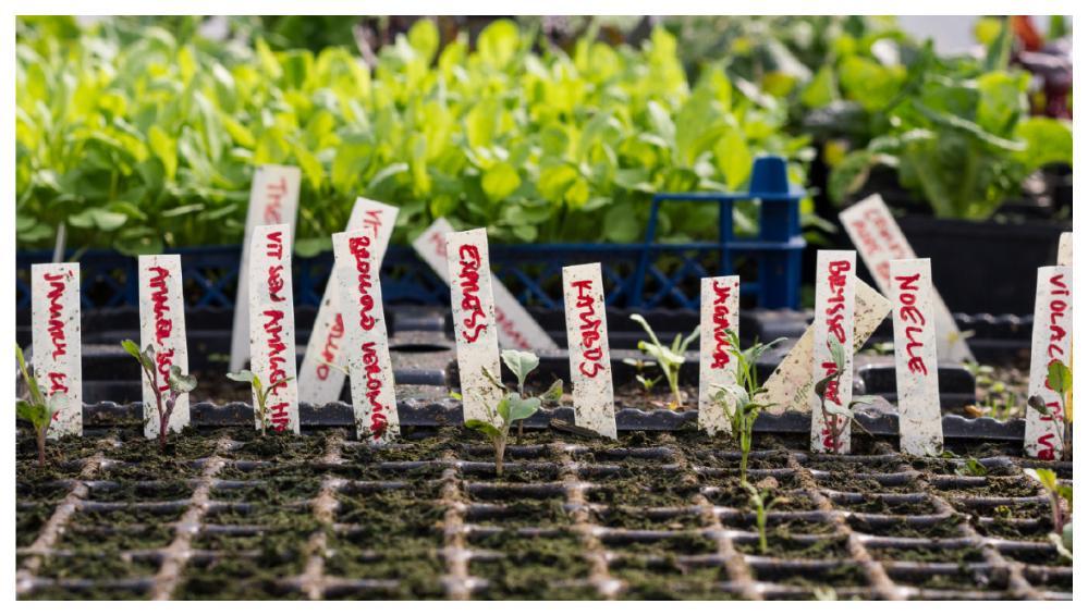 Om du vill ge dina vinterplantor en skjuts på vägen kan du förså dem i mindre kärl innan du planterar ut dem.