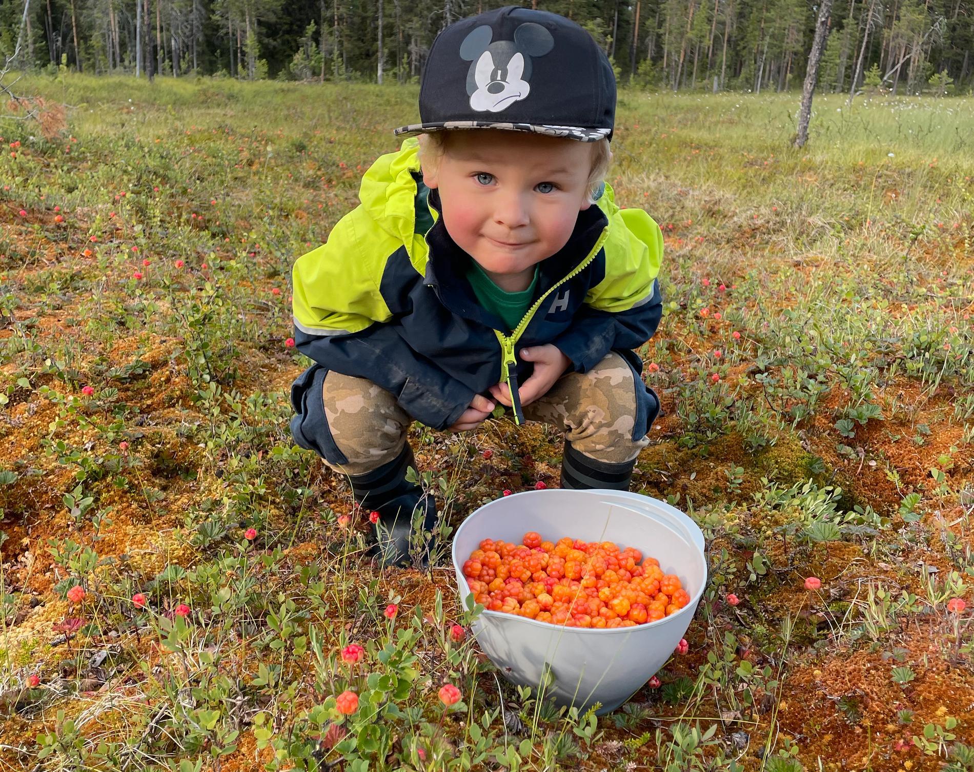 Lille Milo, 3, älskar att plocka hjortron - men inte att äta upp dem. Därför skänkte han bort sina två liter till en äldre kvinna som inte kunde ta sig ut själv