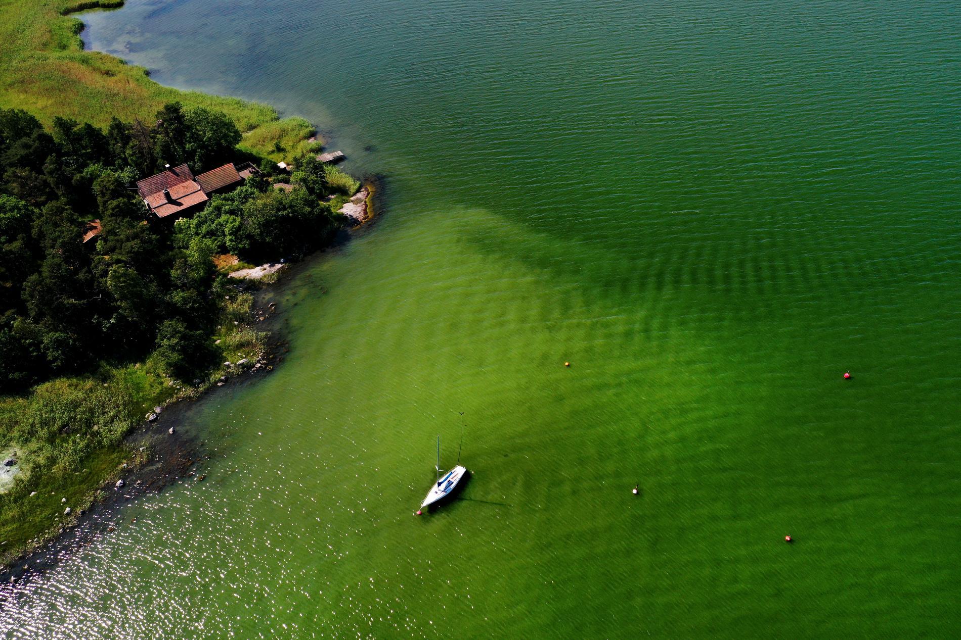 Ytansamlingarna av alger till havs väntas minska när det blåser upp under de kommande dagarna. Bilden visar algblomning i vattnen utanför Tyresö under förra året. Arkivbild.