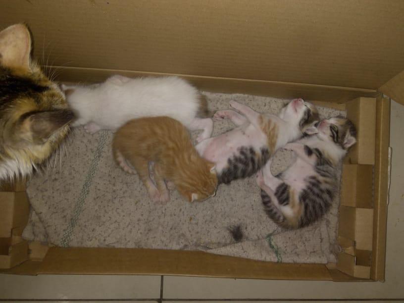 Mimi har även fött fyra kattungar.