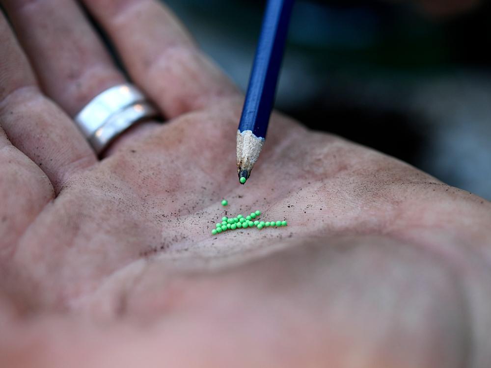 Små frön är lättare att få fatt i med en fuktad penna.