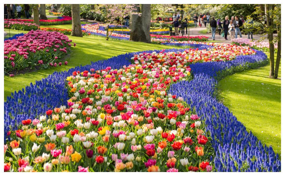 Blomsterprakt i parken i Keukenhof.