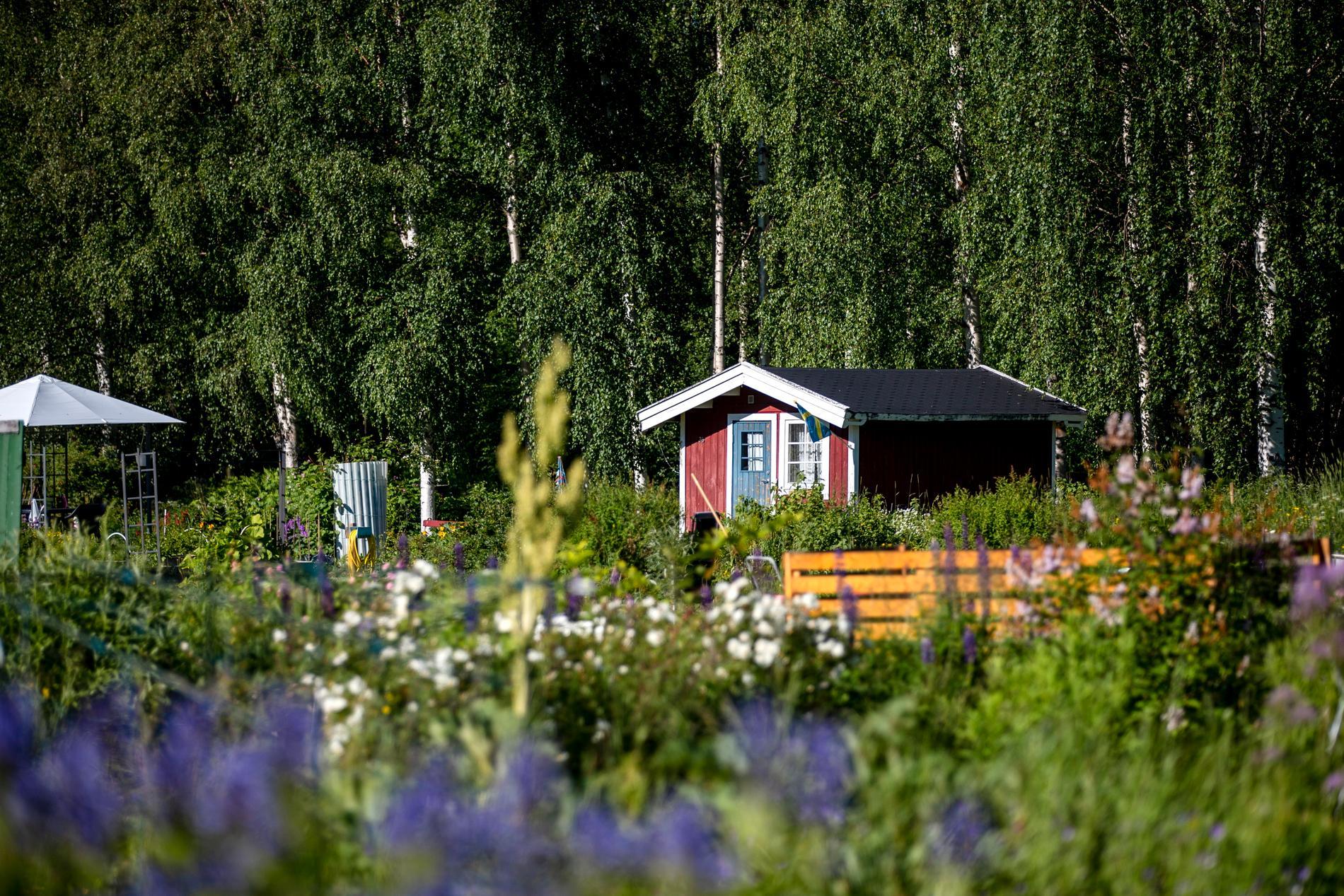 I Sverige finns det cirka 50000 lotter om man inkluderar både lotter med och utan stuga.