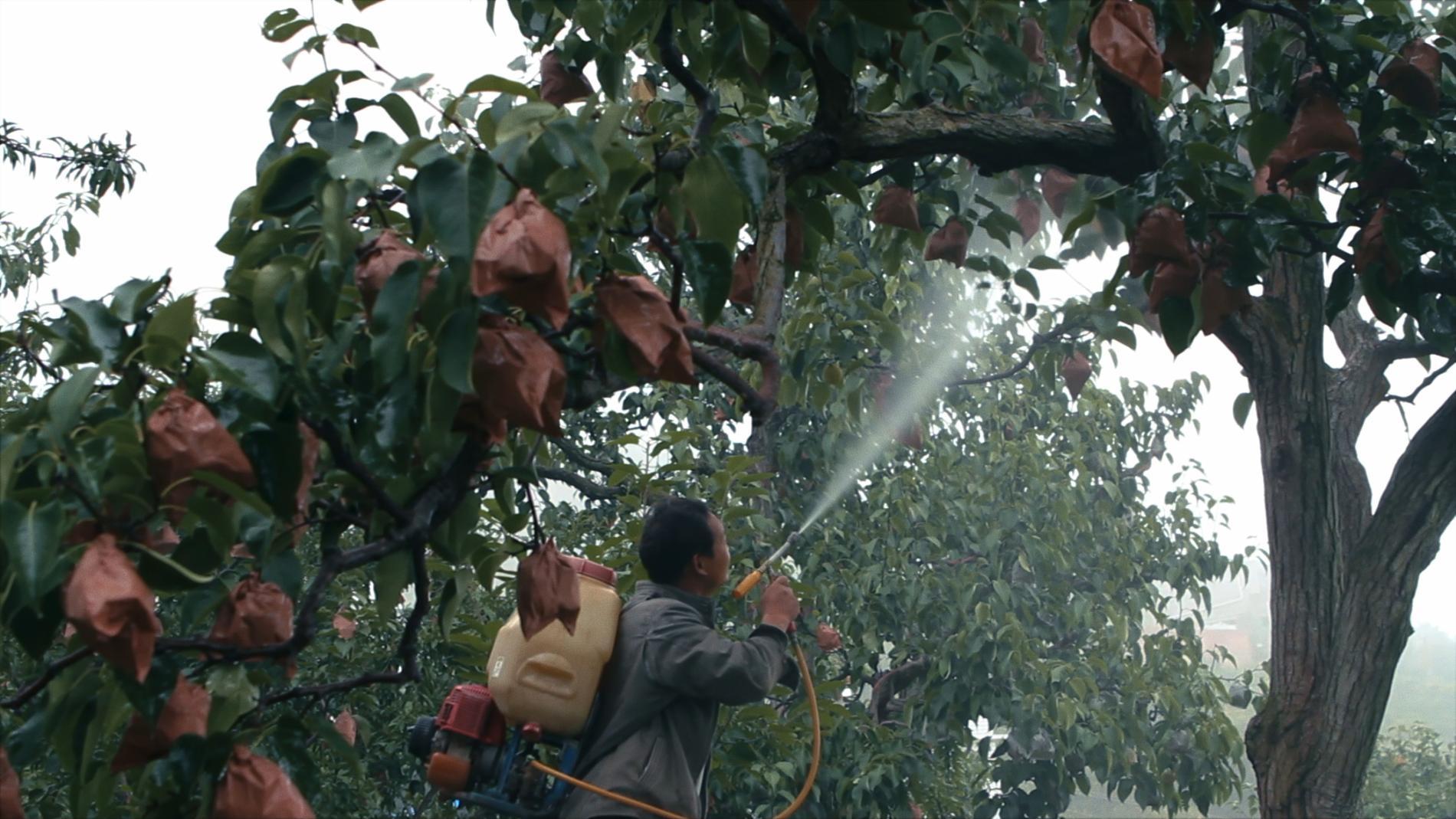 """Besprutning av fruktträd i """"Earth: muted""""."""
