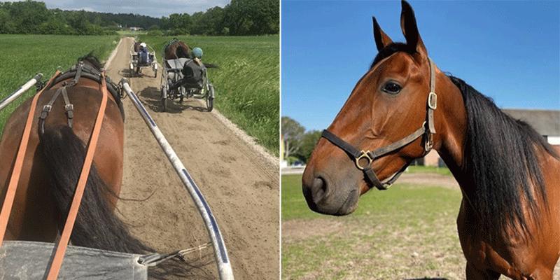 Johan Svenssons nya häst i stallet Michelot skrällvann sin första start i sin nya regi.