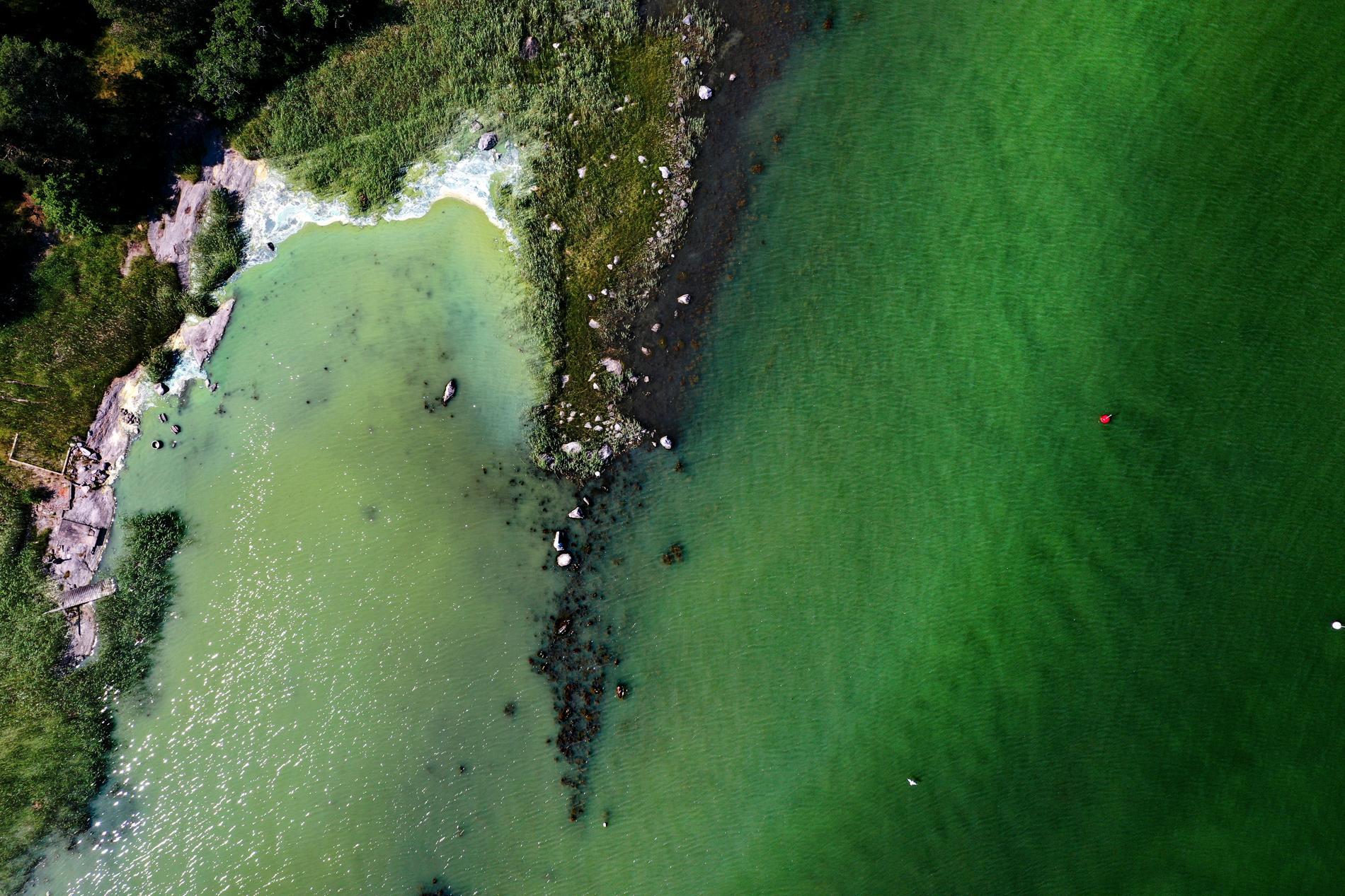 De första rapporterna om algblomning har kommit. Bilden är tagen i vattnen utanför Tyresö förra sommaren.