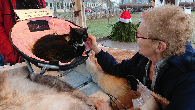 Enligt husse Lars Leveau kan det vara så att Sören Fernström är världens mest klappade katt.