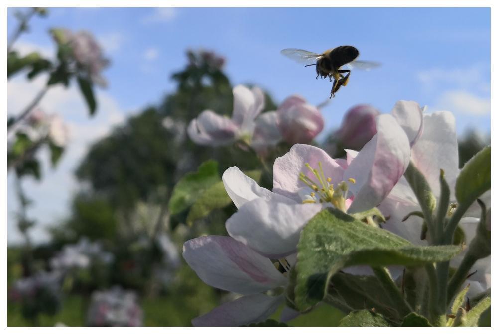 Utan bin blir det ingen frukt.