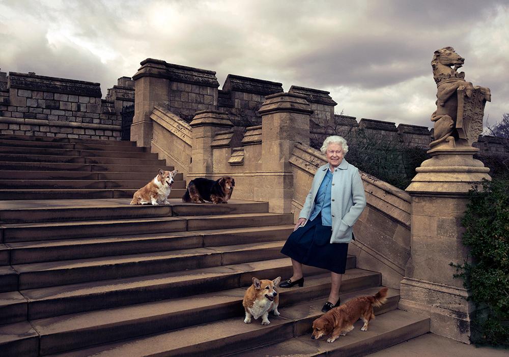 Drottning Elizabeth har haft över 30 corgis genom åren. Första hunden fick hon när hon var sju år gammal. Bilden togs inför drottningens 90-årsdag vid Windsor Castle.