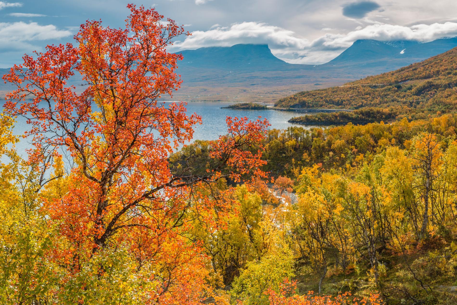 Abisko är kungsledens startpunkt, som är vackert gyllengul i september.