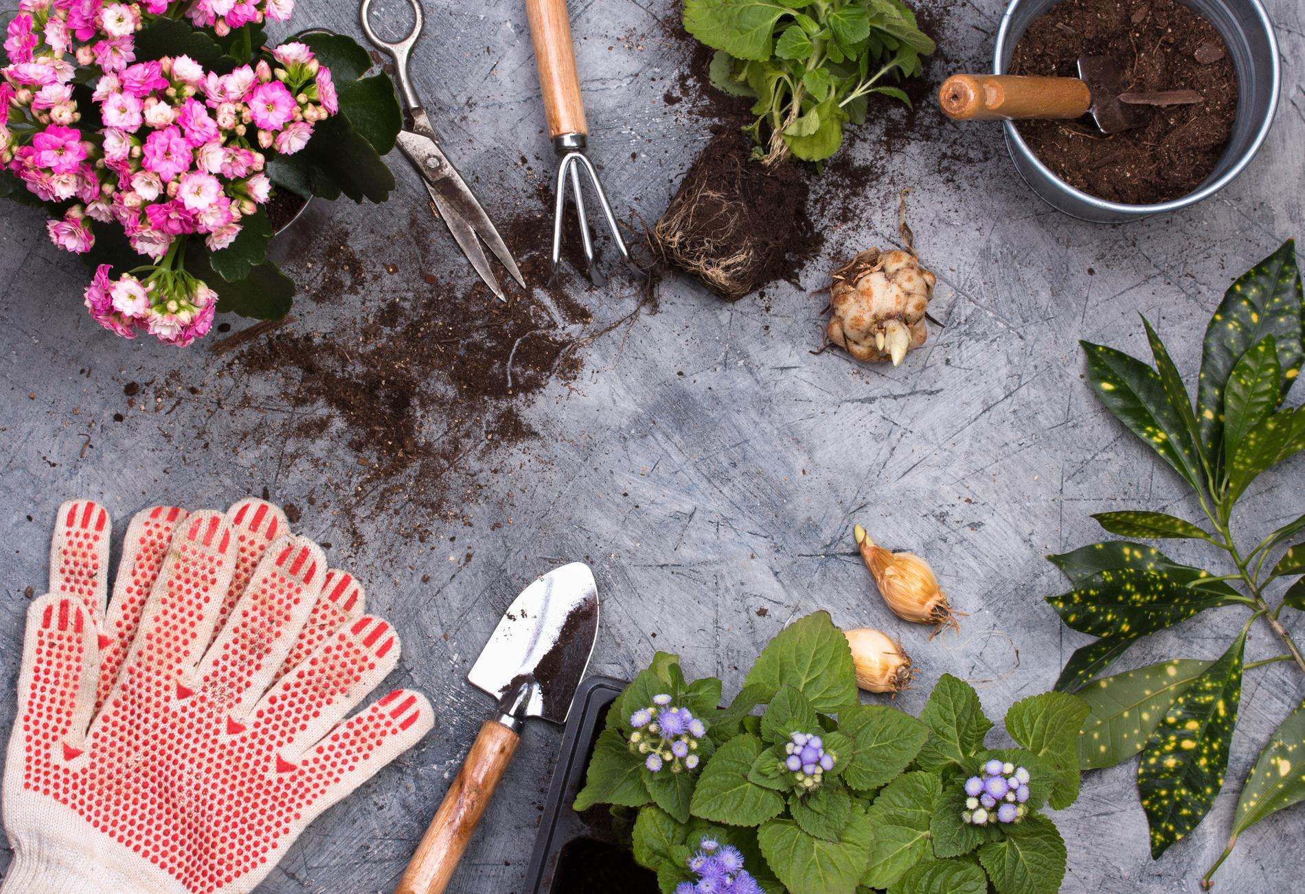 Gör i ordning en plats för dina planteringsprojekt.
