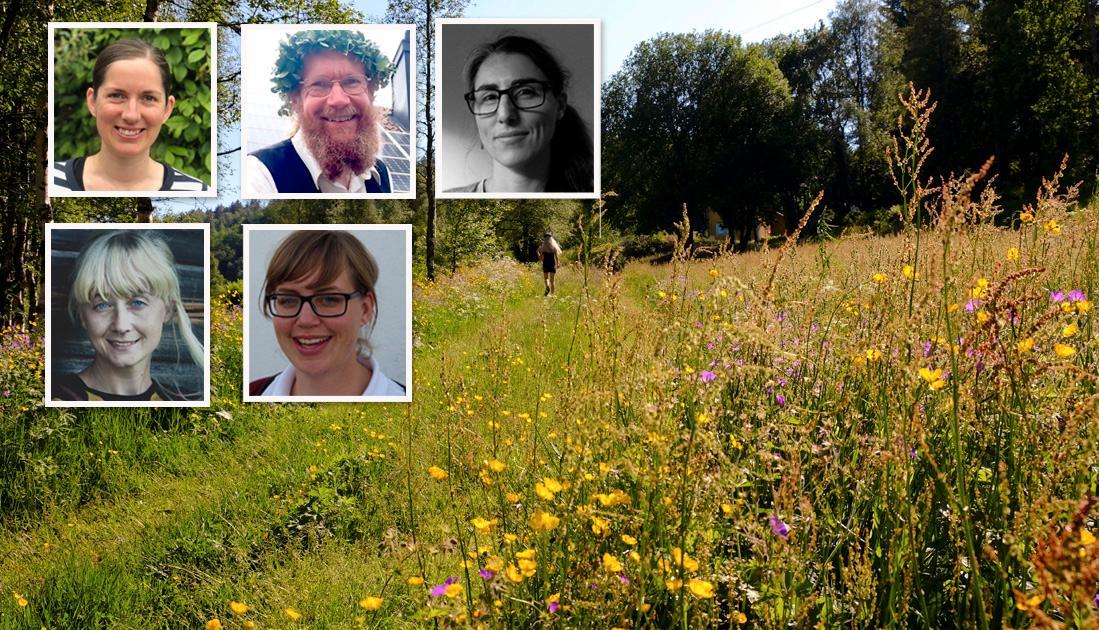 I svenska städer utgörs mer än hälften av ytan av gräsmattor. Om delar av denna yta hade gjorts om till artrika ängar hade pollinerarna gynnats, skriver 5 biologer.