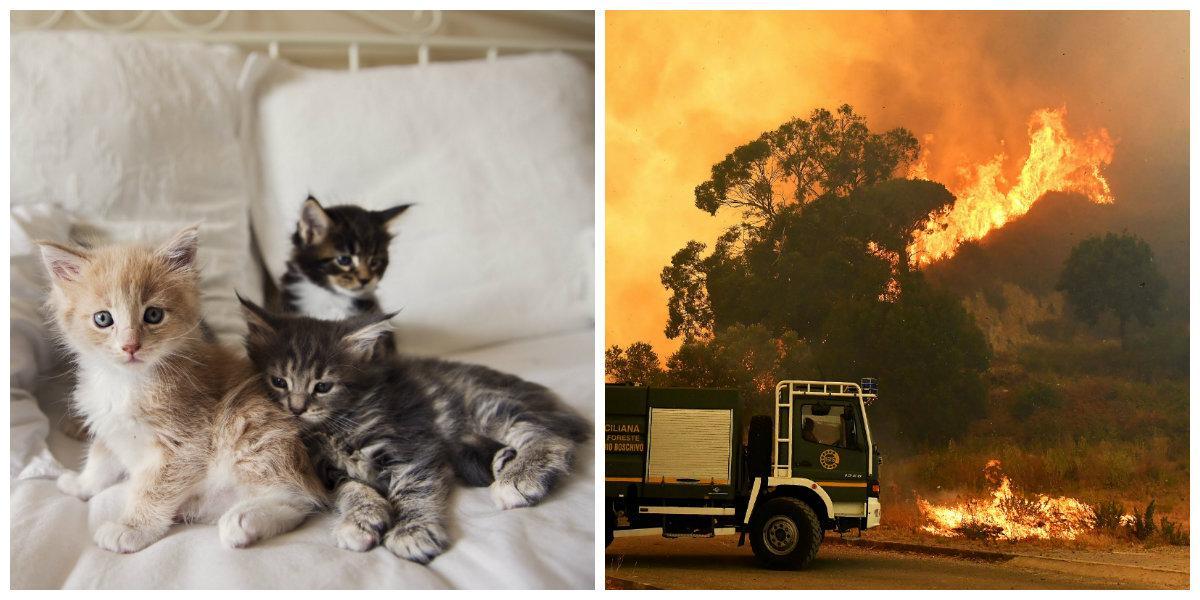 Katterna används som maffians levande facklor