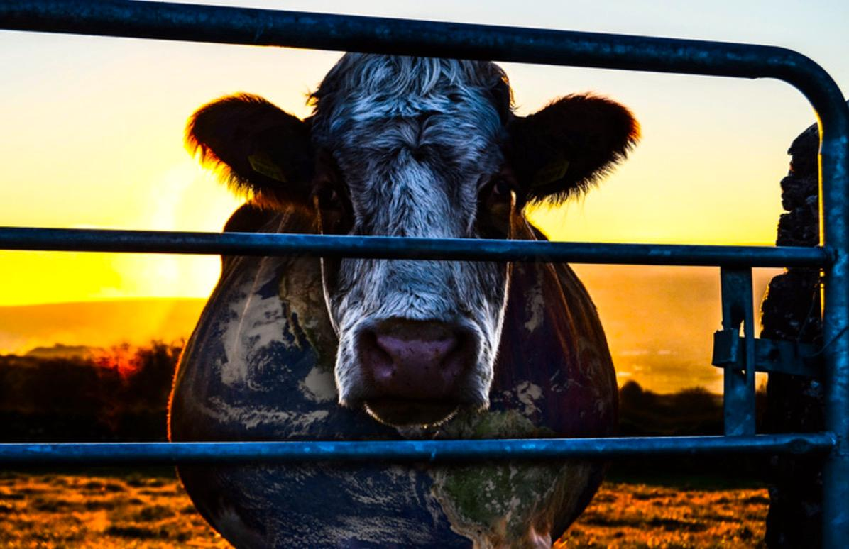 """Cowspiracy"""