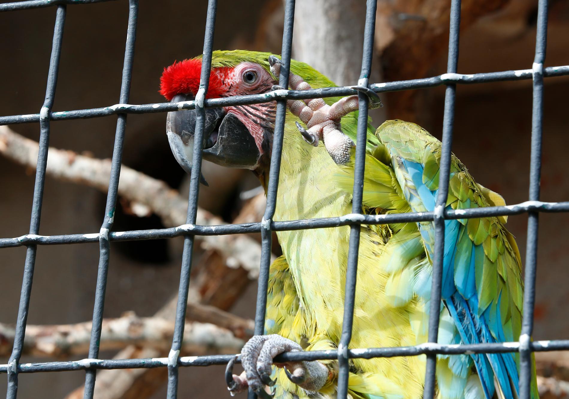 Papegojan är återförd till sin rätta ägare. Arkivbild på en annan papegoja.