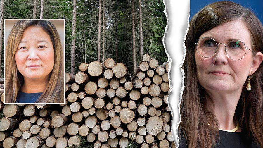 MP äventyrar dagens skogsbruk genom att vilja dubblera ytan skyddad skog och att varken det svenska skogsbruket eller biomassa ska klassas som hållbart och klimatneutralt. Det återstår att se om vi har något skogsbruk kvar om Miljöpartiet fortsätter ges fritt spelrum i skogspolitiken, skriver Jessica Polfjärd.