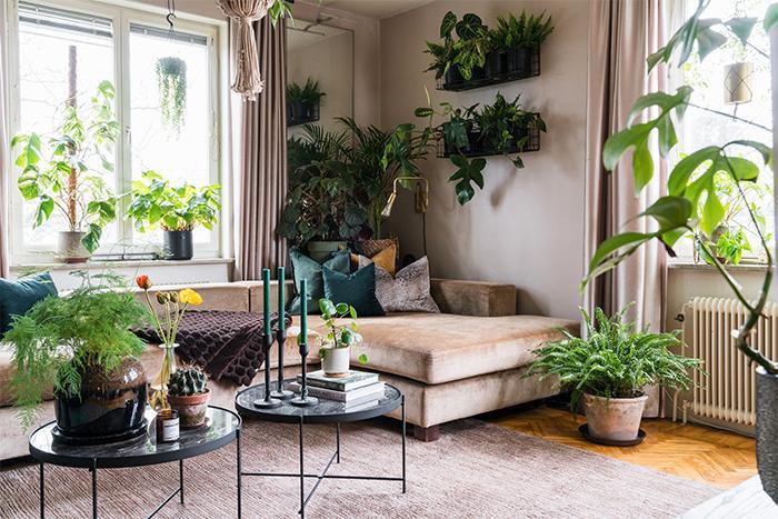 Väggarna har utnyttjats till att få plats med alla växterna. I hörnet står en Bergspalm och en Begionia oldemor, på väggarna hänger Boston fern, Syngonium, Anthurium clarinervium, Philodendron squamiferum och Maranta.