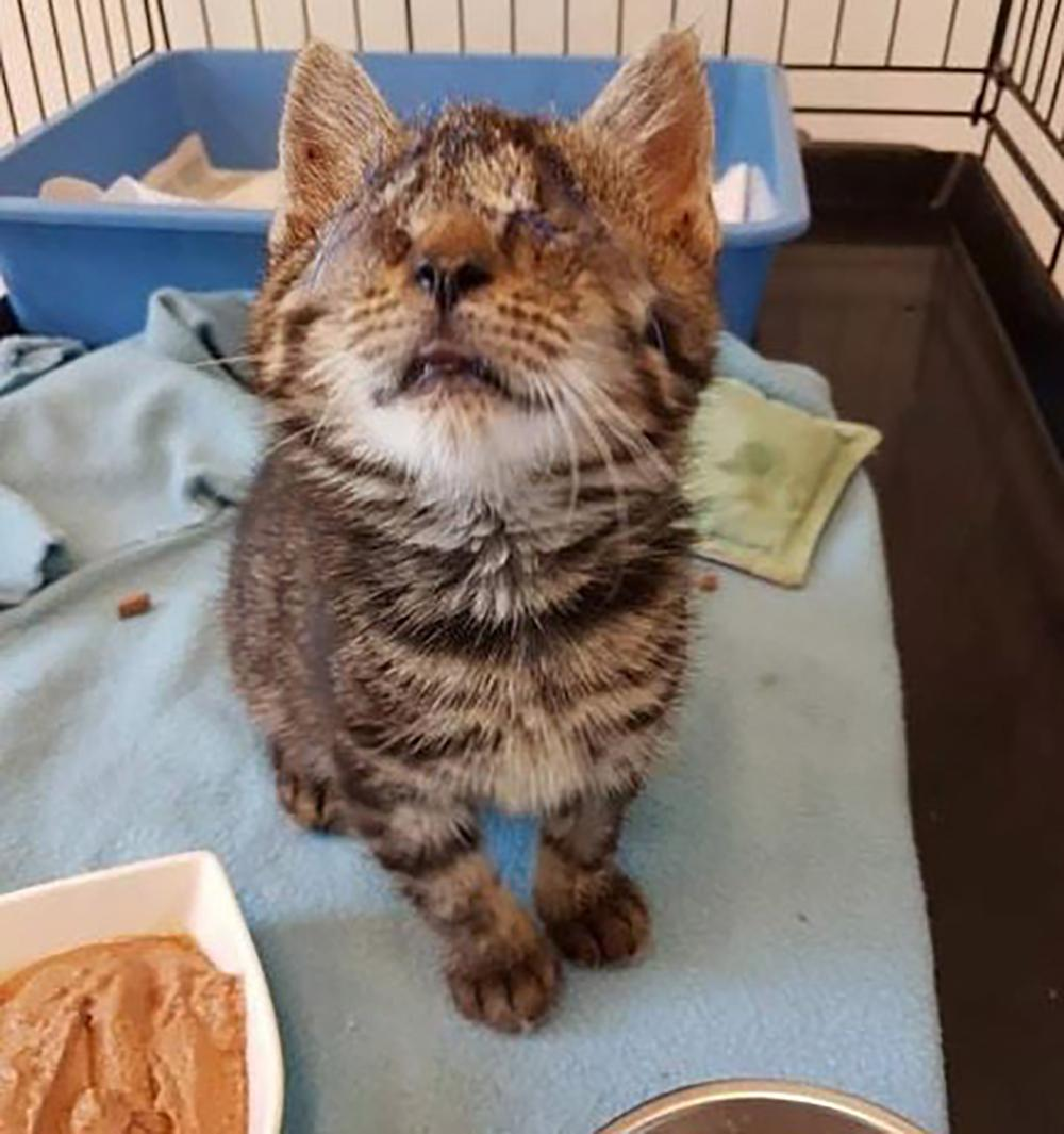 Blinda kattungen Kelly var dödsdömd, men nu har hon fått livet tillbaka.
