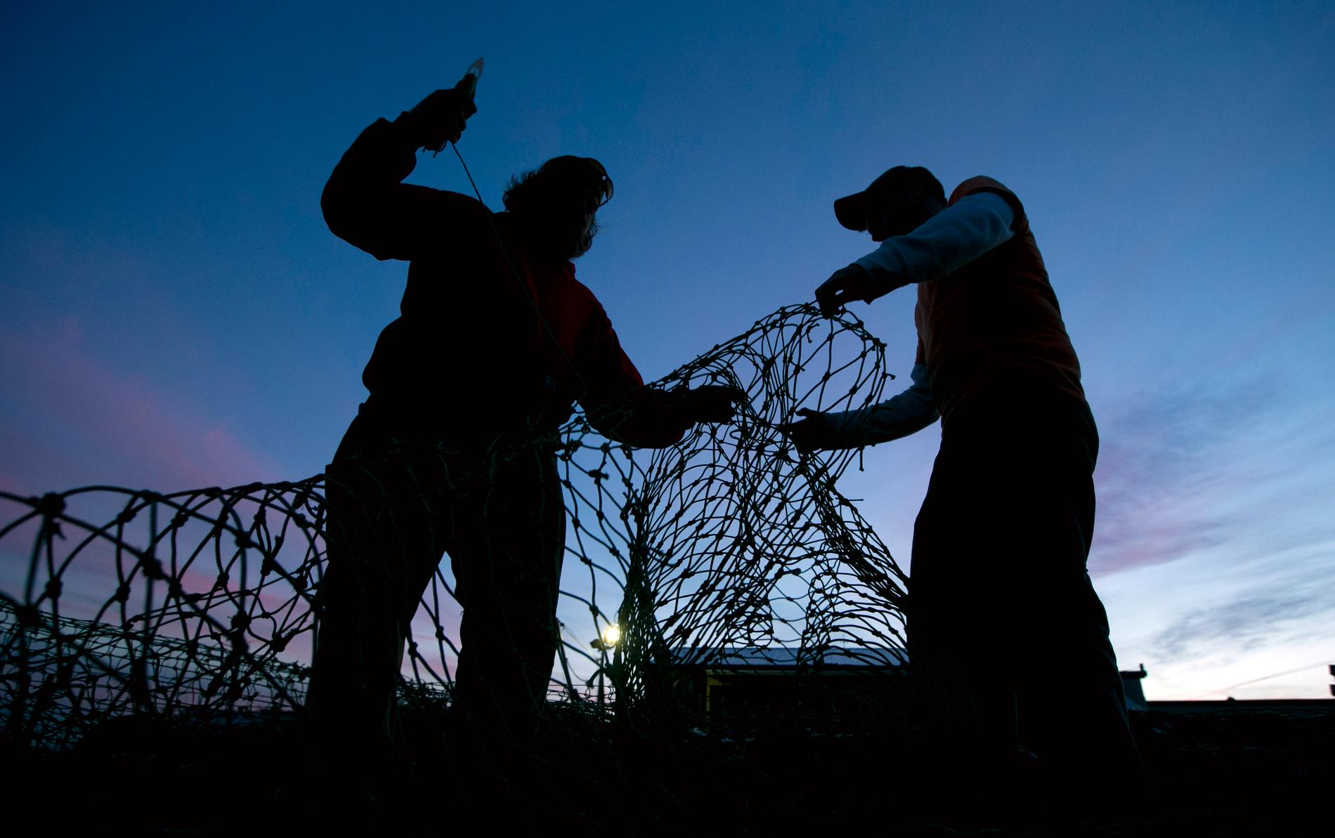 Nätfiske i Bottenhavet ska begränsas, om Havs- och vattenmyndigheten får som den vill. Arkivbild.