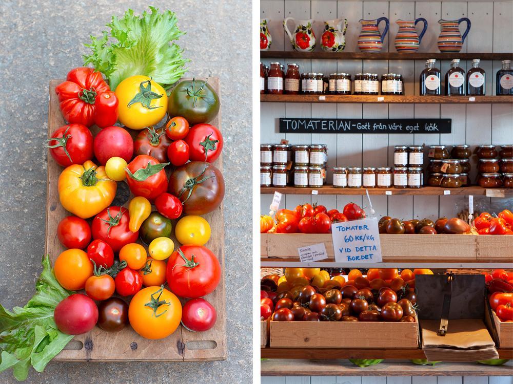 På Tomatens hus finns det gott om tomater – hela 60 olika sorter.