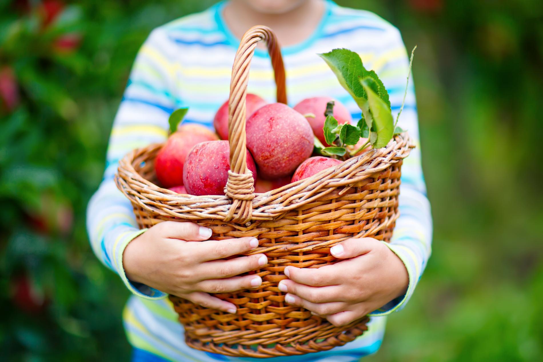 Äpplen, honung och svamp är några av de saker man kan köpa på en skördefest.