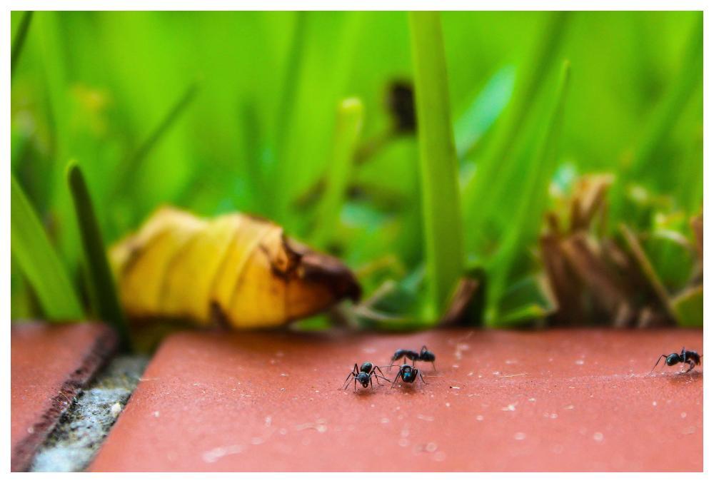 Kriget mot myrorna trappas upp.