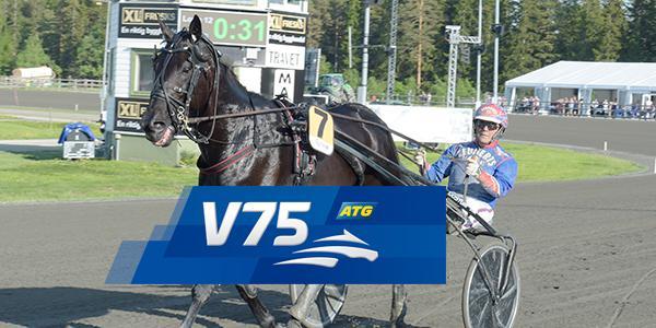 Eldorado B. är en av lördagens V75-spikar på Årjäng.