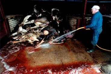 bse finns än När galna ko-sjukan exploderade i mitten på 1990-talet kom krav på ursprungsmärkning av kött. Men det slarvas med märkningen och konsumenten är förloraren. I dag finns 225 fall av BSE - bara i Europa.