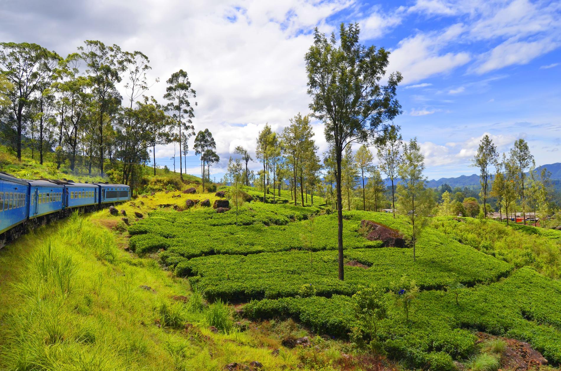 Många åker tåg till det grönskande Kandy.