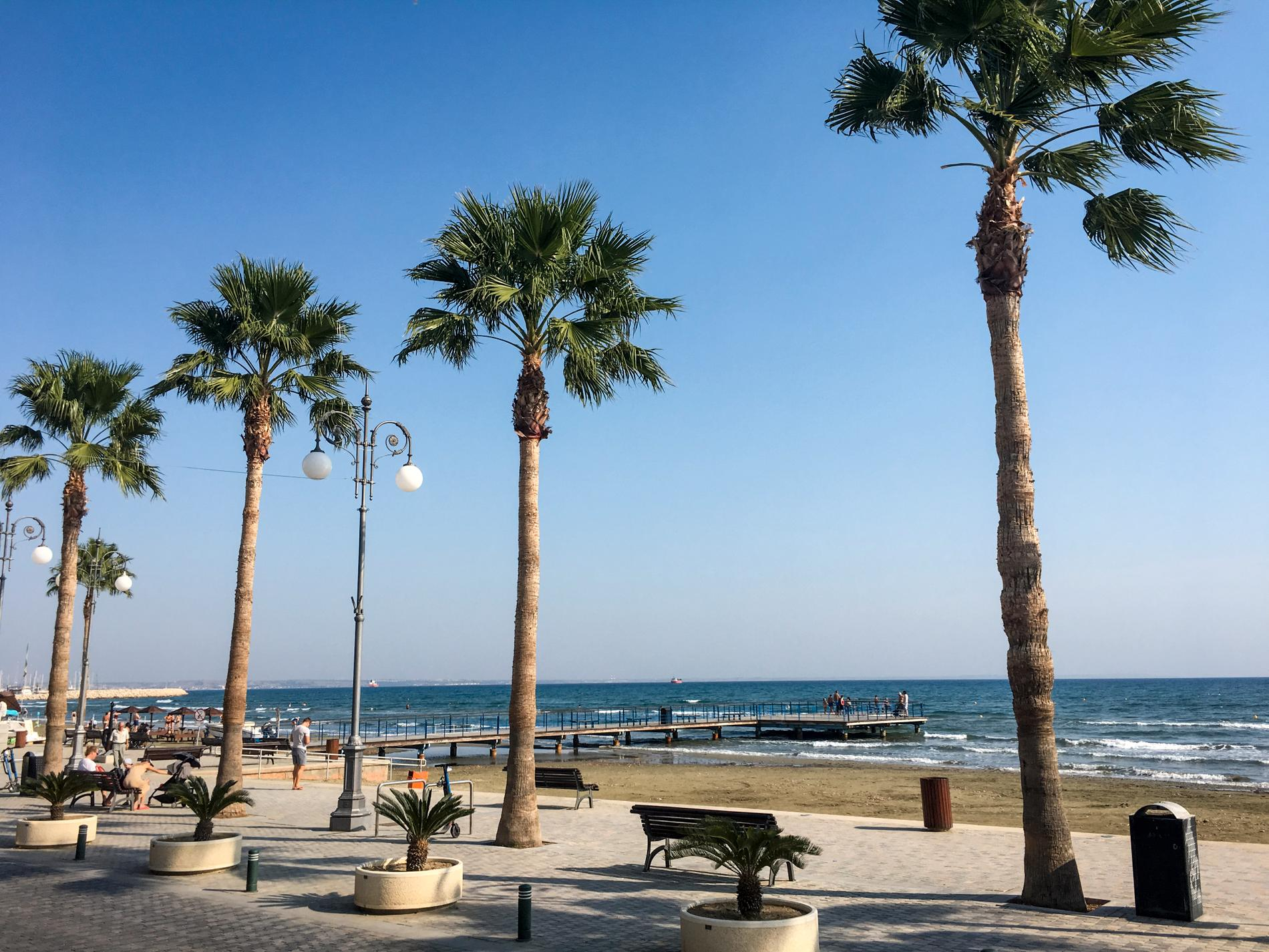 Palmer på stranden i Larnaca