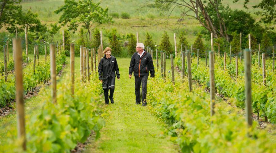 Vingården Villa Mathilda i Arild ägs och drivs av Marie-Louise och Carl-Magnus Hedin. Här görs vin på druvorna Solaris och Siegerrebe.