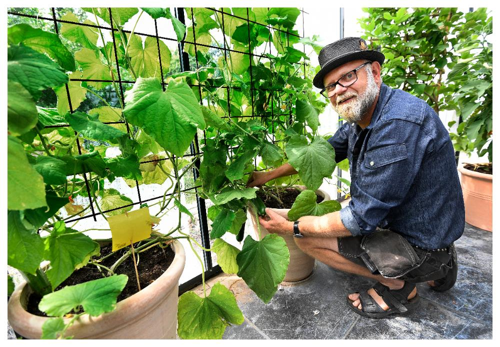 Gurkplantor kräver stora krukor.