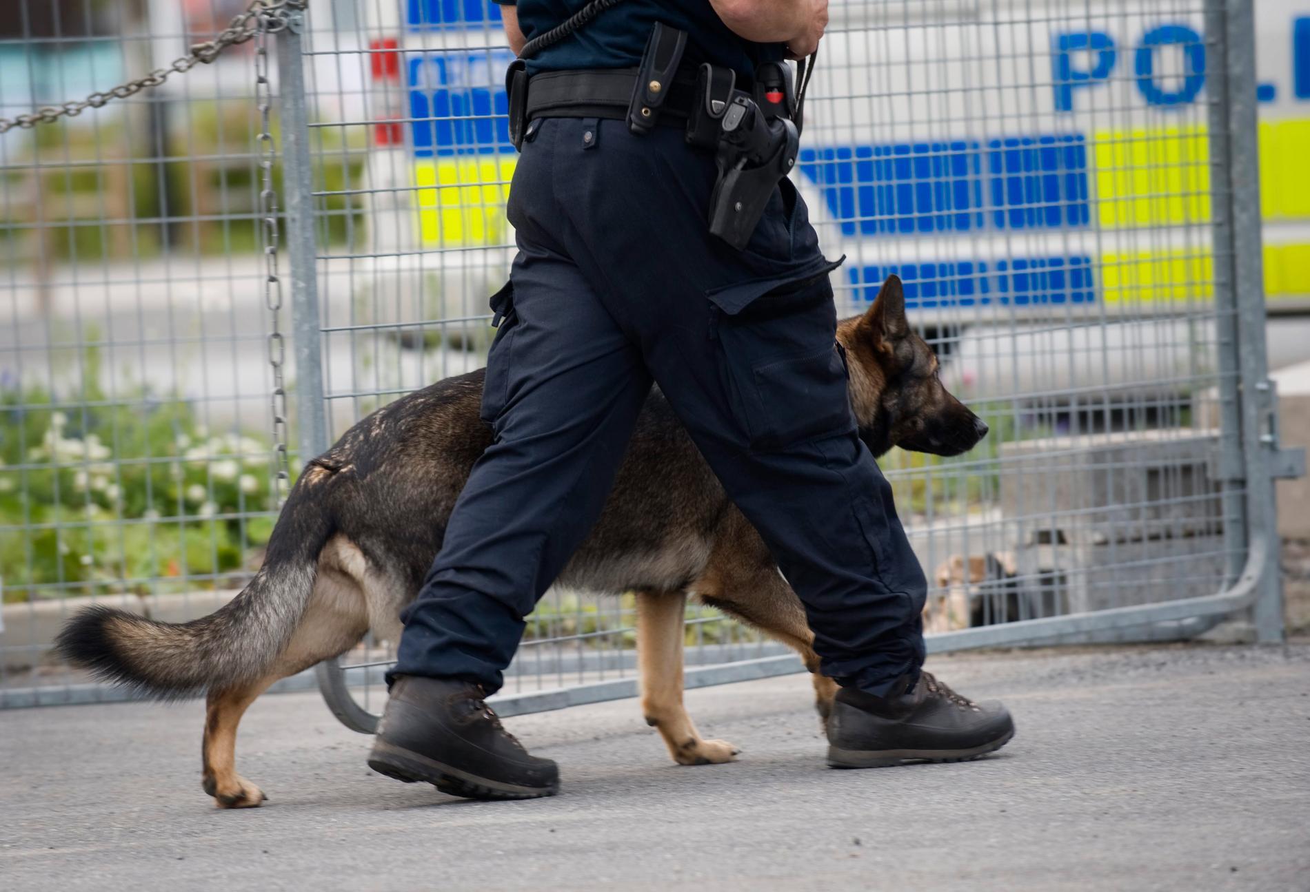 En polishund hittade en misstänkt inbrottstjuv som låg och sov i en buske i Umeå. Nu har mannen dömts till två månaders fängelse. Arkivbild.