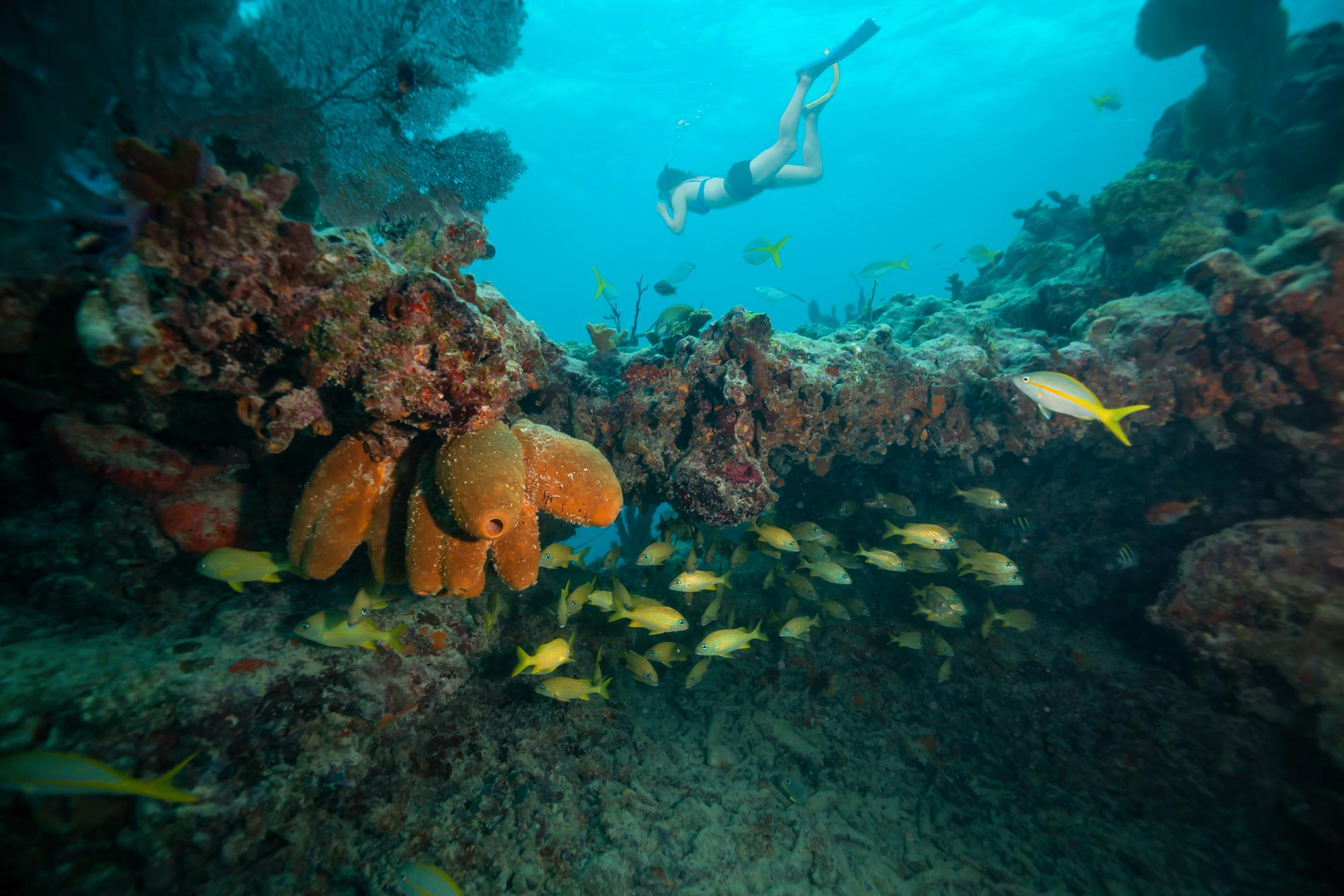 I Florida dör koraller av en mystisk sjukdom.