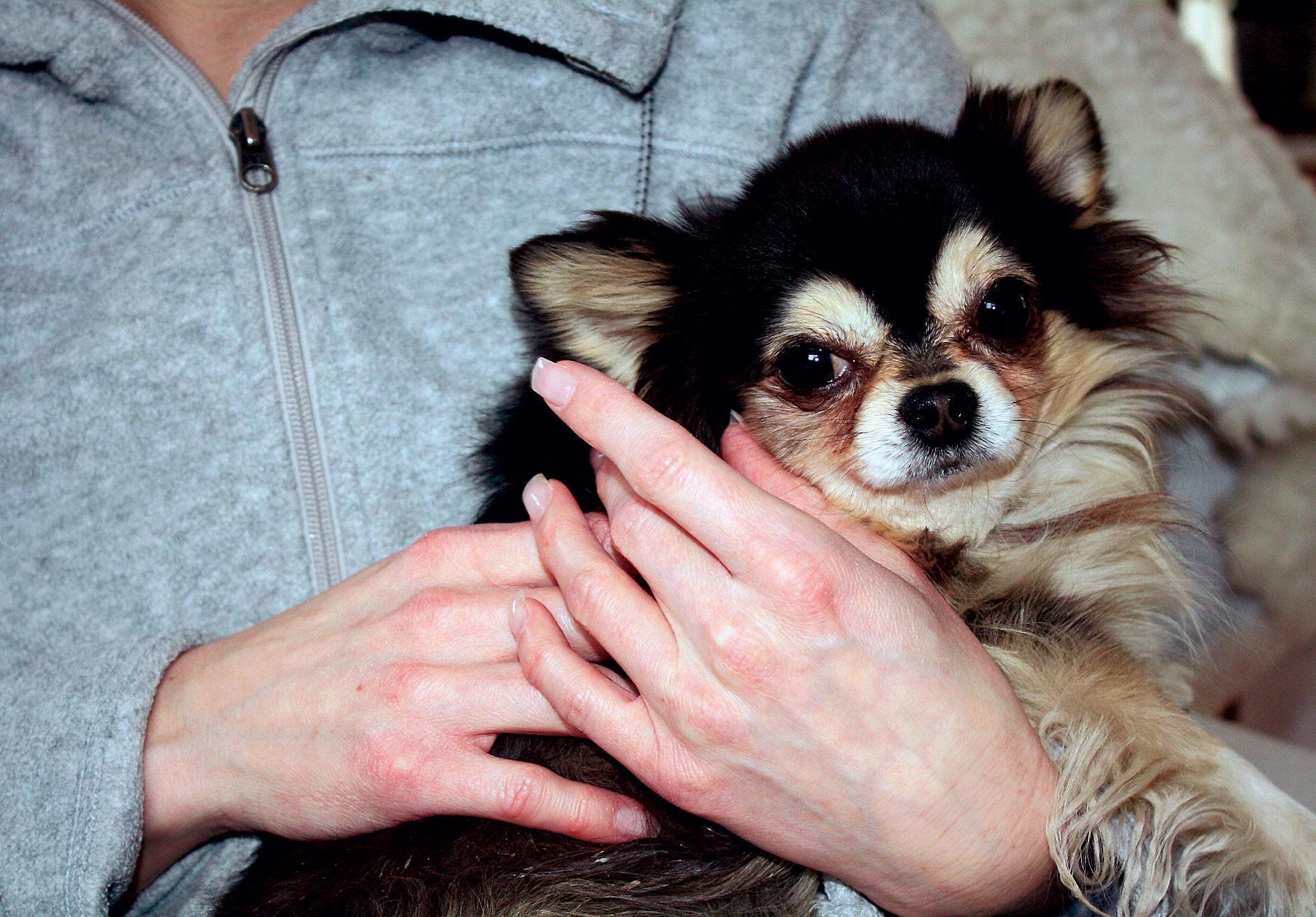 """kramar sin lånehund. Anna skäms över att hon lät sig luras av hundsmugglaren. """"Men jag kunde bara inte motstå valpen och ville inte att han skulle vara kvar hos mannen"""" säger hon."""