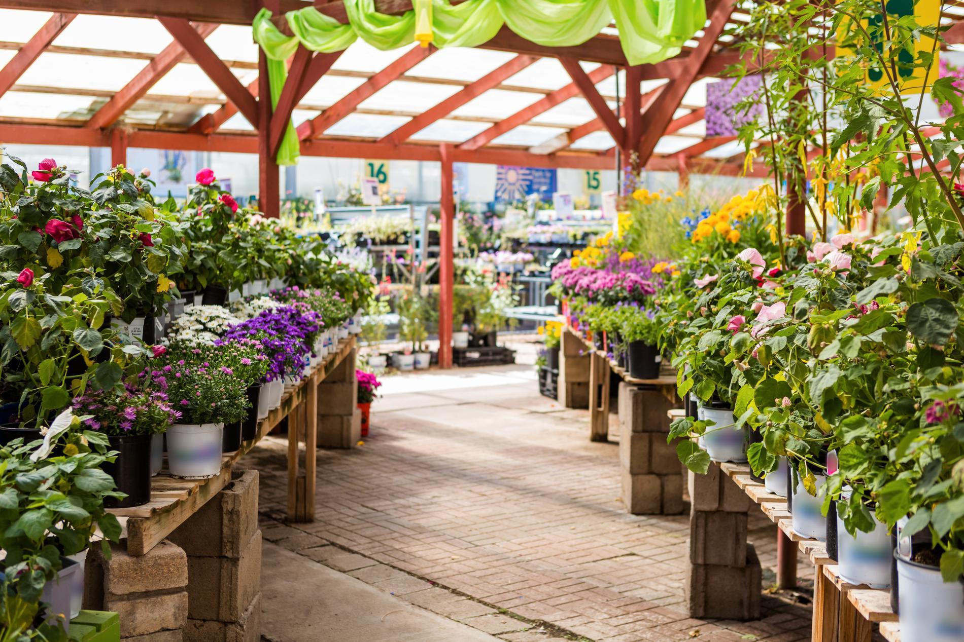 I Stockholmsområdet finns en rad olika handelsträdgårdar.