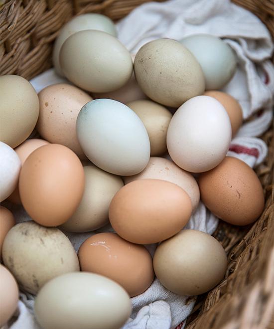 Olika hönsraser ger olika färg på äggen.