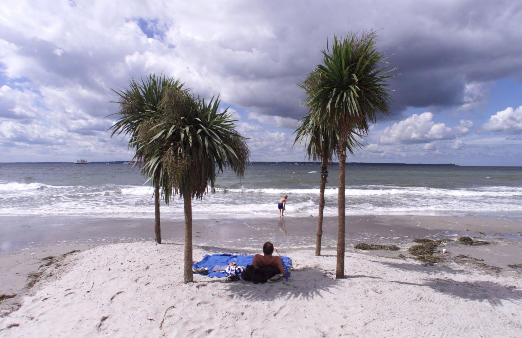 Palmerna ger stranden en minst sagt tropisk känsla.