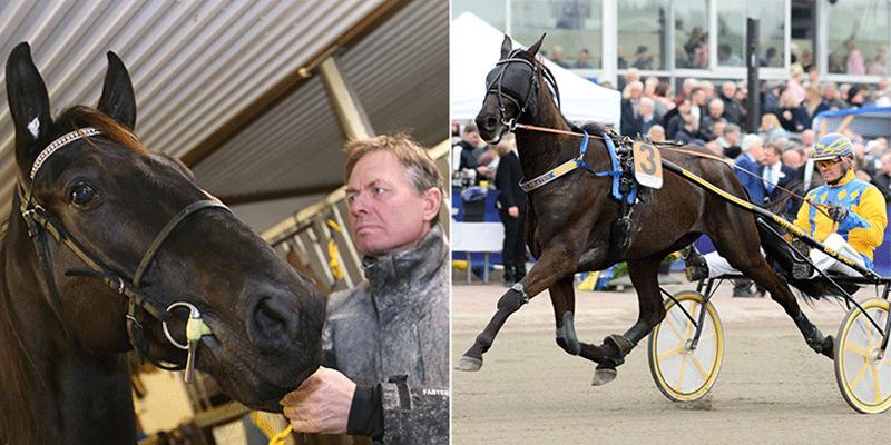 Hans R Strömbergs dalahäst närmar sig 20 miljoner i intjänade pengar – men hur länge tävlar han?