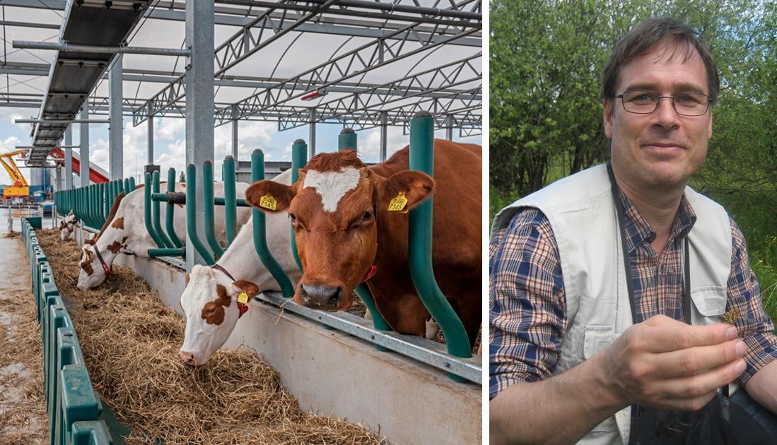 För det första behöver konsumtionen av animalisk föda minska. Detta minskar utsläppen av den kraftfulla växthusgasen metan som idisslare producerar, skriver Henrik Smith, professor i zooekologi.