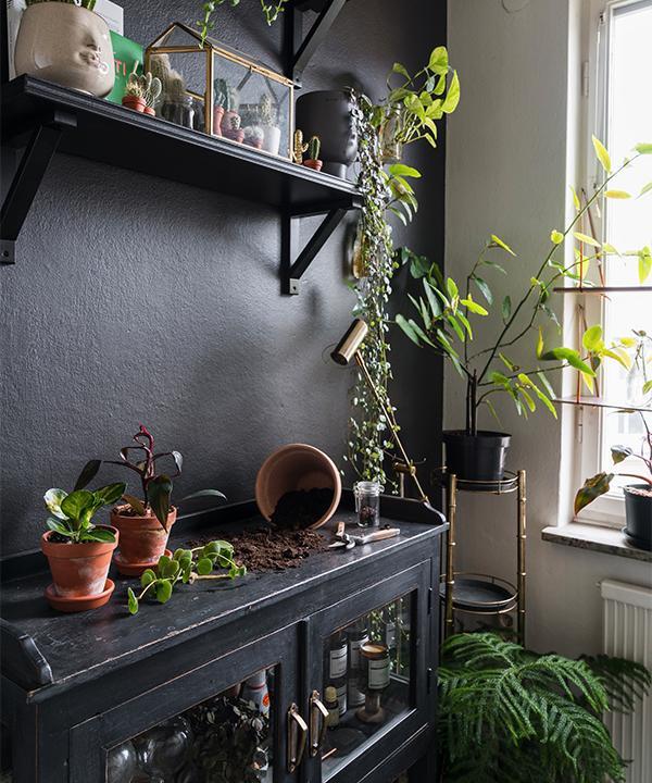 Köket är inrett med en planteringshörna där Emelie kan sköta om sina växter. Det svarta bordet från Soulosofie är köpt genom jobbet och är en av favoritsakerna i hemmet. Väggen och hyllorna målades in i samma svarta färg för att bli extra tåliga.