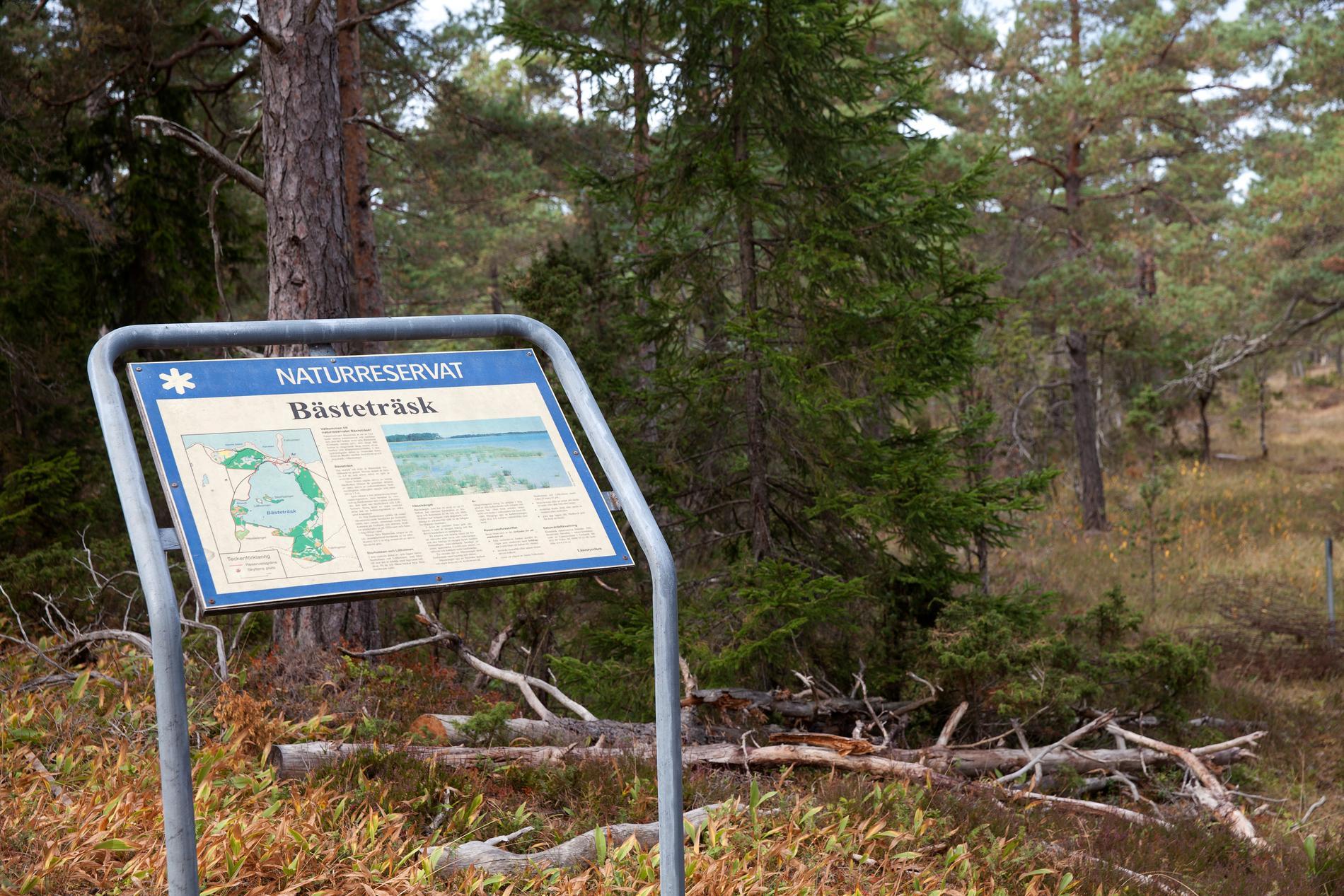 Klockan 11 i dag kommer domen i Mark- och miljööverdomstolen om bolagen Nordkalks och SMA Minerals stenbrytning i Ojnareskogen på norra Gotland. Arkivbild.