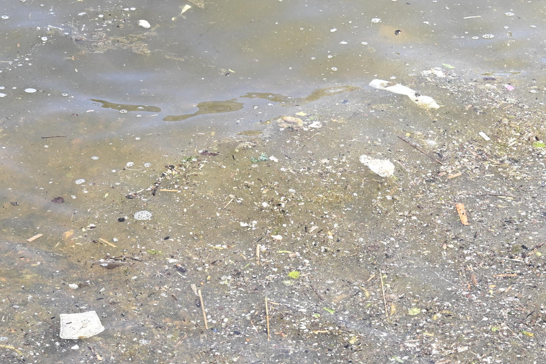 Avloppsvatten ut från Stockholms reningsverk.