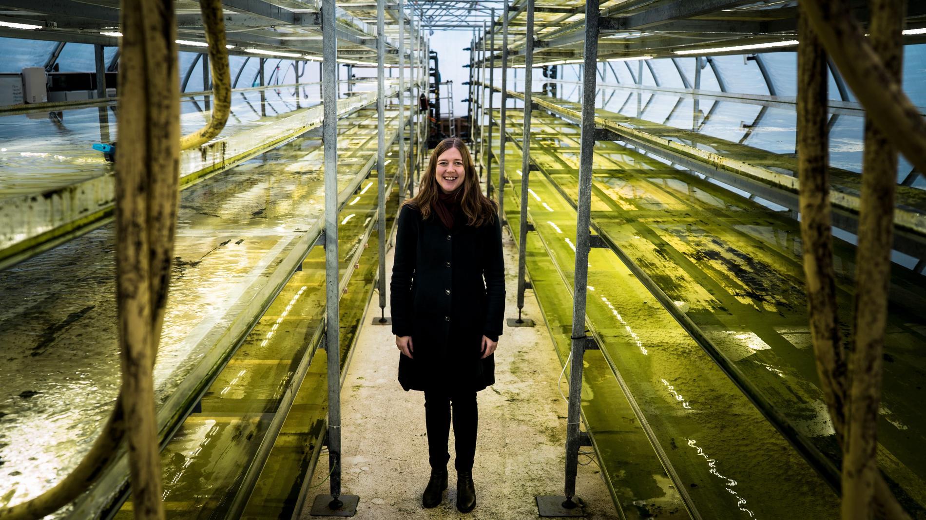 Sofie Allert i växthuset där algen odlas fram
