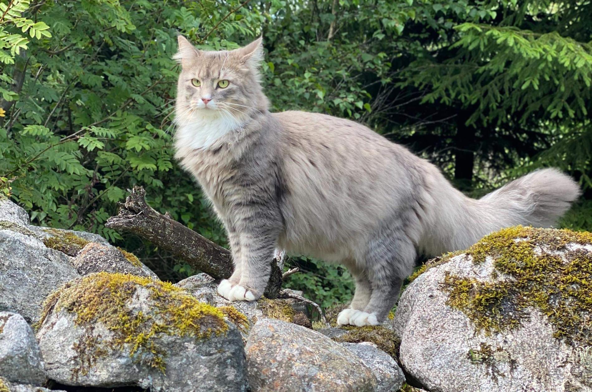 Katten Missen fyllde ett år några veckor innan händelsen.