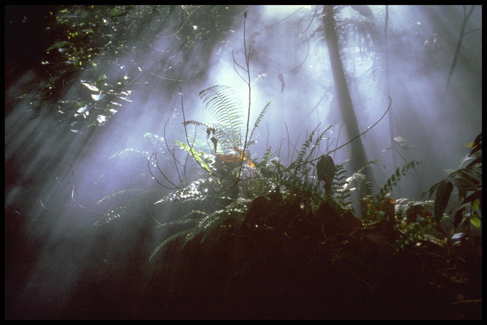 EU-kommissionen slog nyligen fast att odlingen av palmolja resulterar i omfattande avskogning.