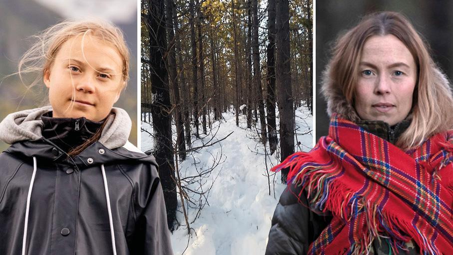 För renskötseln är SCA:s trädplantage av contortatall förödande – men även den biologiska mångfalden, skriver 35 samebyar, Greta Thunberg och Sofia Jannok tillsammans med experter och organisationer.